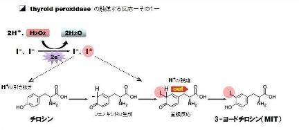 hydrogen peroxide-7