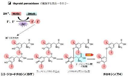 hydrogen peroxide-8