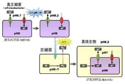 mitochondria-8
