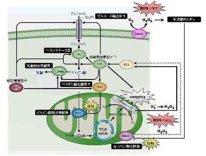 mitochondria-12