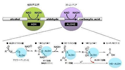 aldehyde dehydrogenase-1