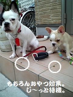 DVC00001_20080904115647.jpg