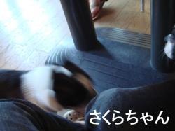 8月15日 さくらちゃん