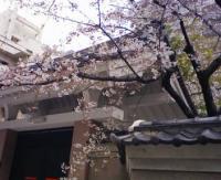 090331 寺町の桜2