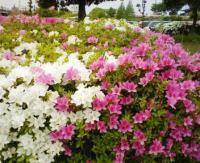 090505 花
