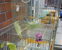 090611  家の鳥