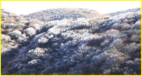 樹氷873