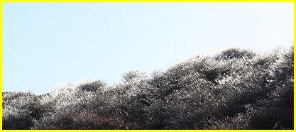 樹氷882