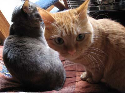 猫ふたり1