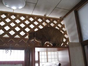 のぼる猫3