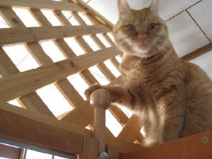 のぼる猫6