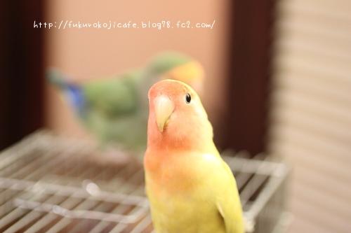 ぽんずちゃん2
