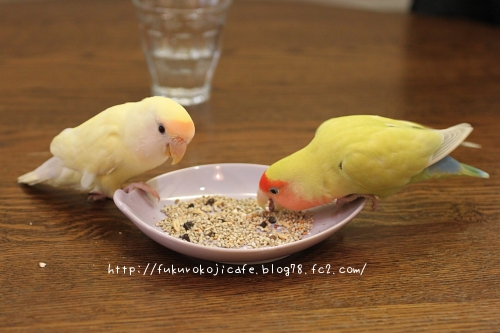 リモ&くく ランチタイム