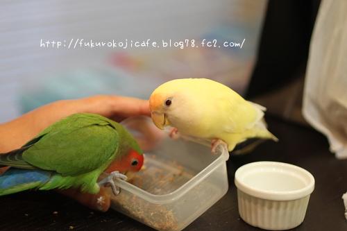 食いしん坊たち