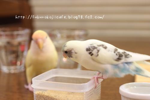ハル&くく1