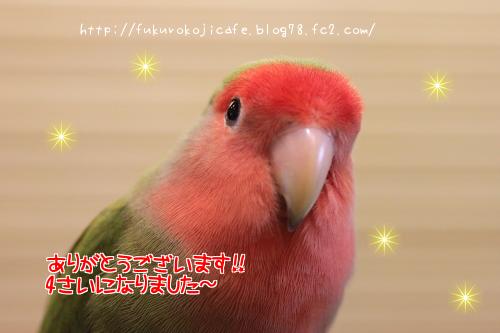 いちごちゃん1