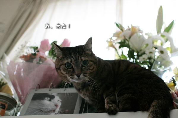 20090110-11.jpg