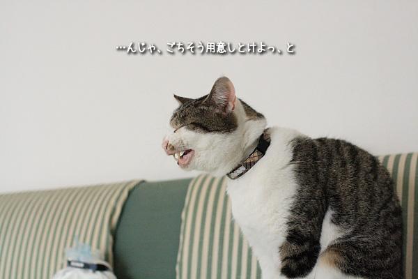 20090414-7.jpg