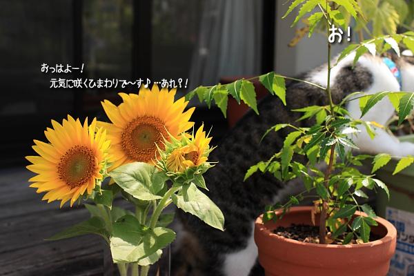 20090827-3.jpg