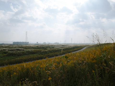 淀川河川敷 秋のある日