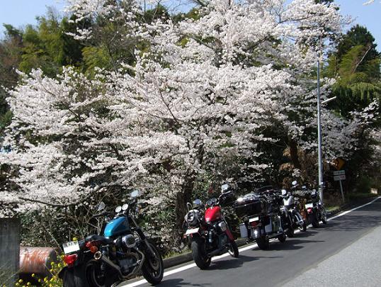 2008_0402房総、桜ツーリング0013