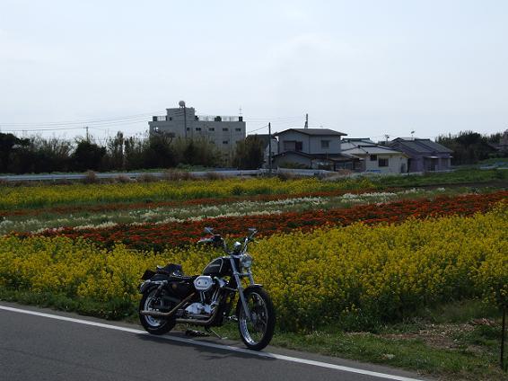 2008_0402房総、桜ツーリング0026