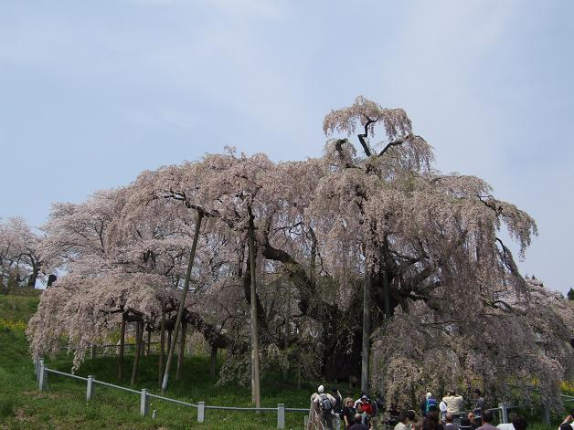 2008_0423三春滝桜ツー0005