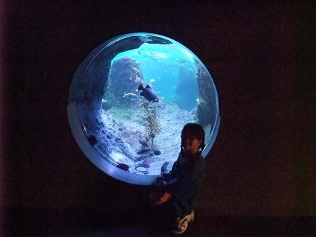 2008_1001水族館0014