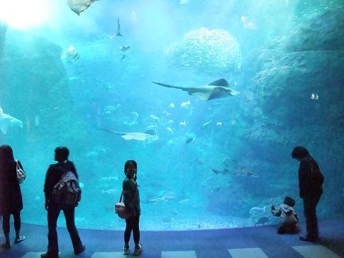 2008_1001水族館0019