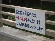 亀戸天神 鳩のエサ090525_cIMG_0189