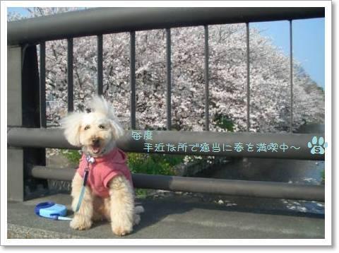 桜2009 002