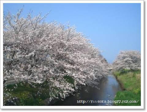 桜2009 001