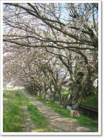 桜2009 006
