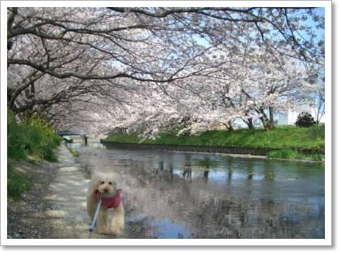 桜2009 009