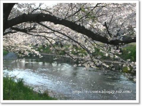 桜2009 012
