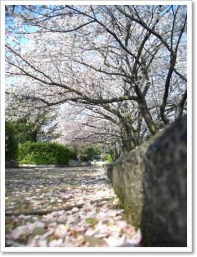 桜2009 013