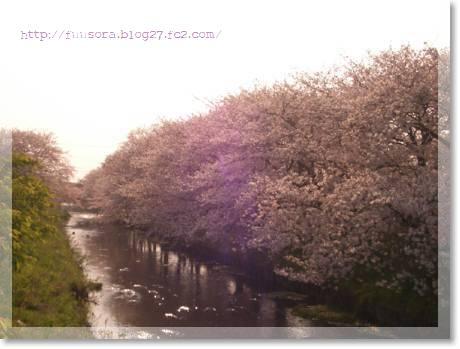 桜2009 011