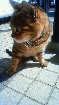 ネコちゃん 1