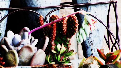 紫蓮殿の花