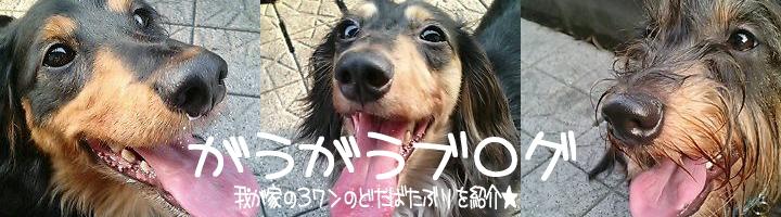 がうがうブログo(≧∇≦)o゛
