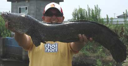 本日の最大魚84cm