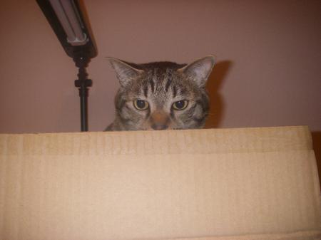 とら 家政猫
