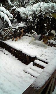 hana&momo@snow
