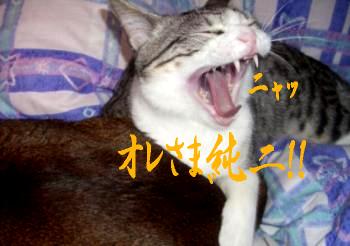 純ニ@替え歌4