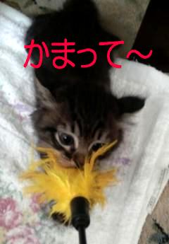 キン玉@なぁちゃんなぁちゃん1