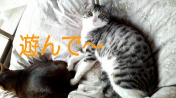 純二@なぁちゃんなぁちゃん2