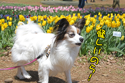 hitachi100424_021