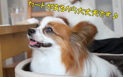 johoku_park_060