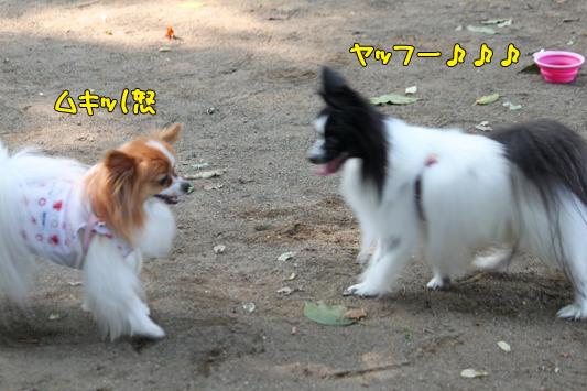 johoku_park_143