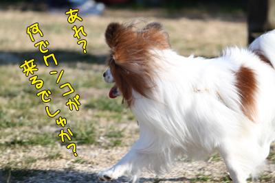 kashiwa_100110_055